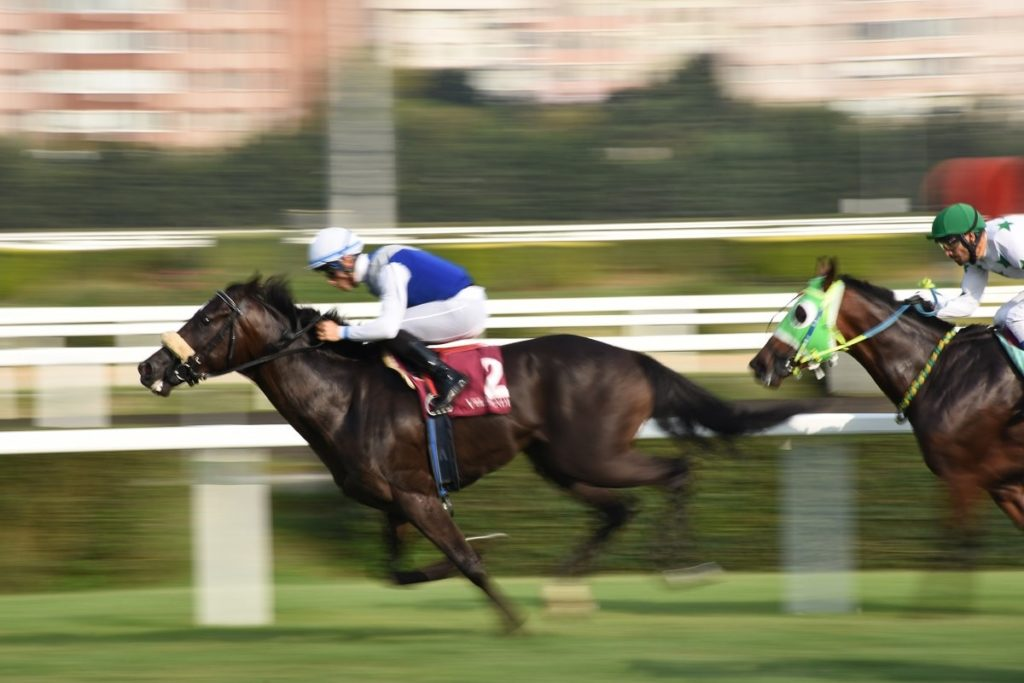 Wygrywanie wyścigów konnych